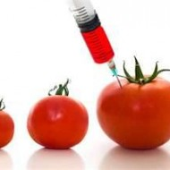 More on Genetically Engineered Organism's and Monsanto