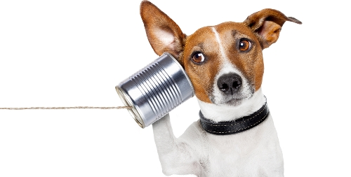 dog_listening