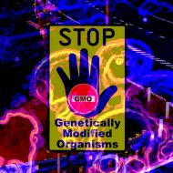 Genetically Modified Genes remain inside you..read more