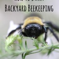 How to Start Backyard Beekeeping